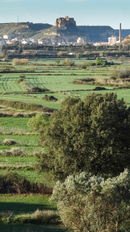 biomasa-monzon-rondasomontano